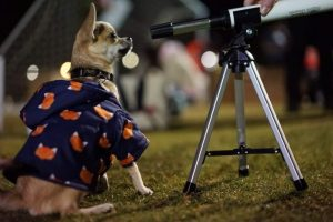 A dog looking through a telescope