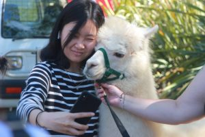 Student takes selfie with an alpaca